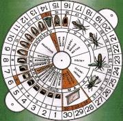 Календарь вывода пчеломаток